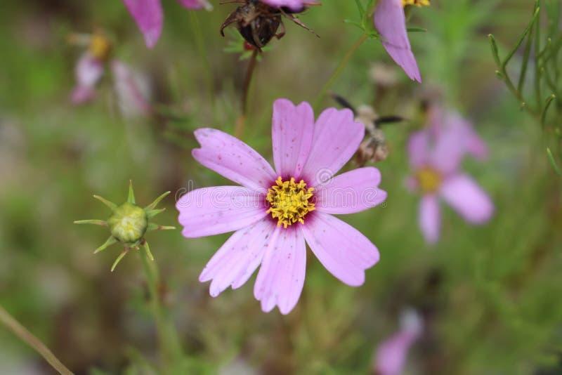 Fantastisk blomma på fältet fotografering för bildbyråer