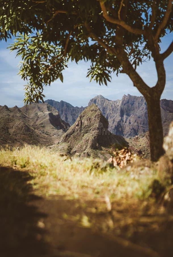 Fantastisk enorm karg bergskedja som visas på horisonten Glödande sol det enda mangoträdet som ger skugga Santo fotografering för bildbyråer