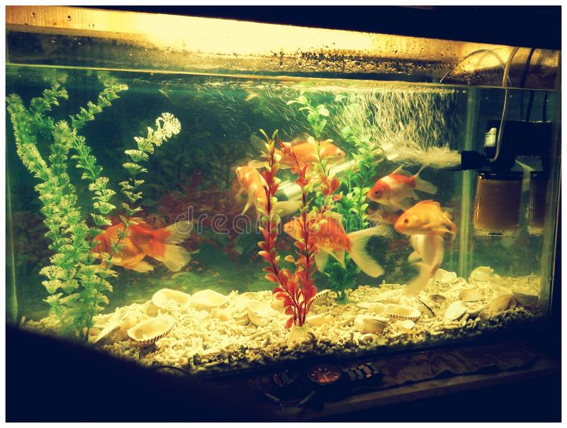 fantastisk fisk royaltyfri foto