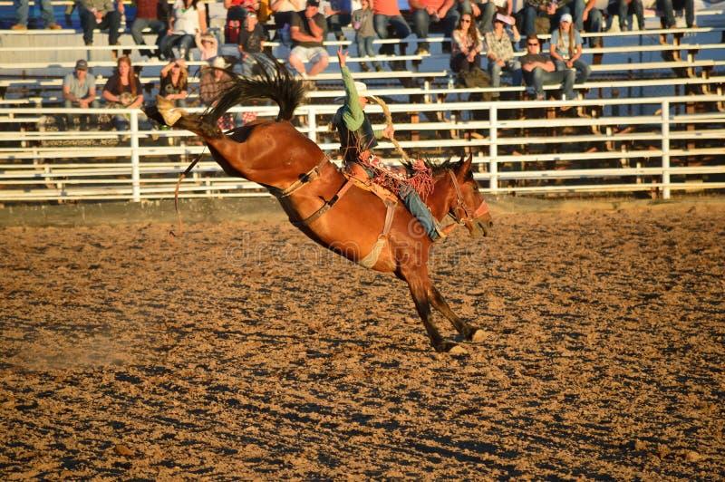 Fantastisk hästryggryttare arkivfoton