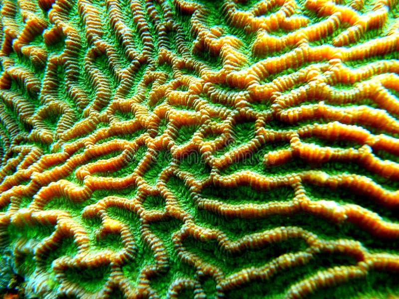Fantastisk korall arkivfoton