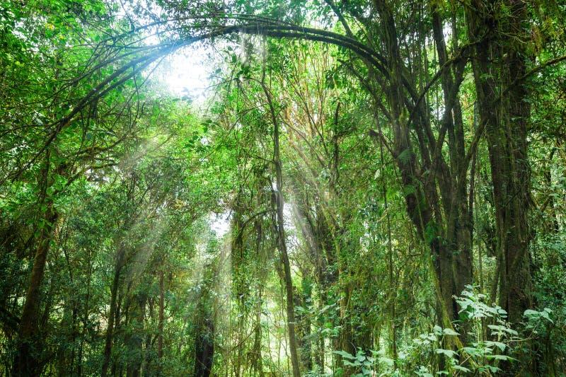 Fantastisk morgon på den tropiska rainforesten Thailand fotografering för bildbyråer