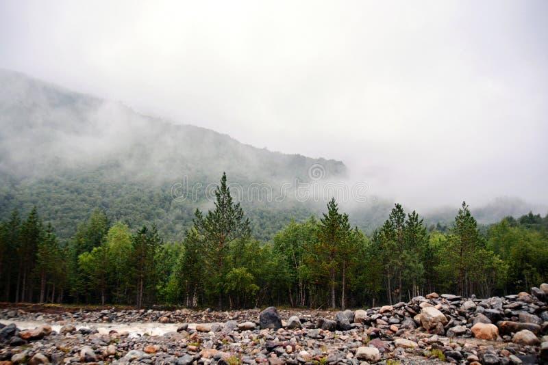 Fantastisk natursikt av den gröna bergskogen och trädet som växer på en vagga, naturligt landskapperspektiv, Kaukasus, Ryssland royaltyfria bilder