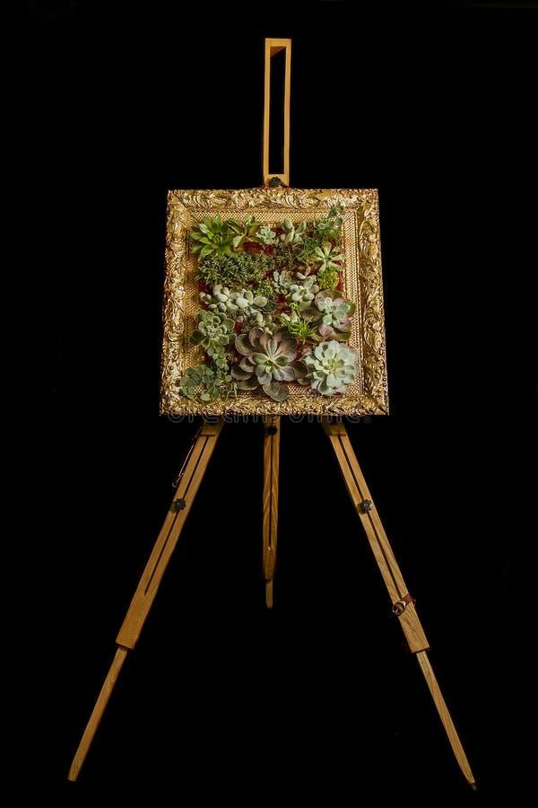 Fantastisk sammansättning av suckulenten blommar i en ram fotografering för bildbyråer