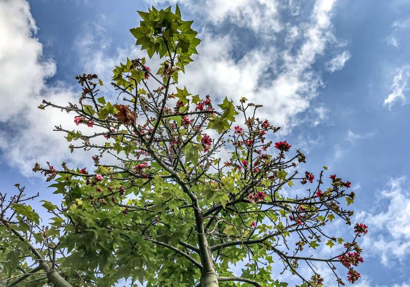 Fantastisk sikt över ett flemish träd till himlen royaltyfri bild