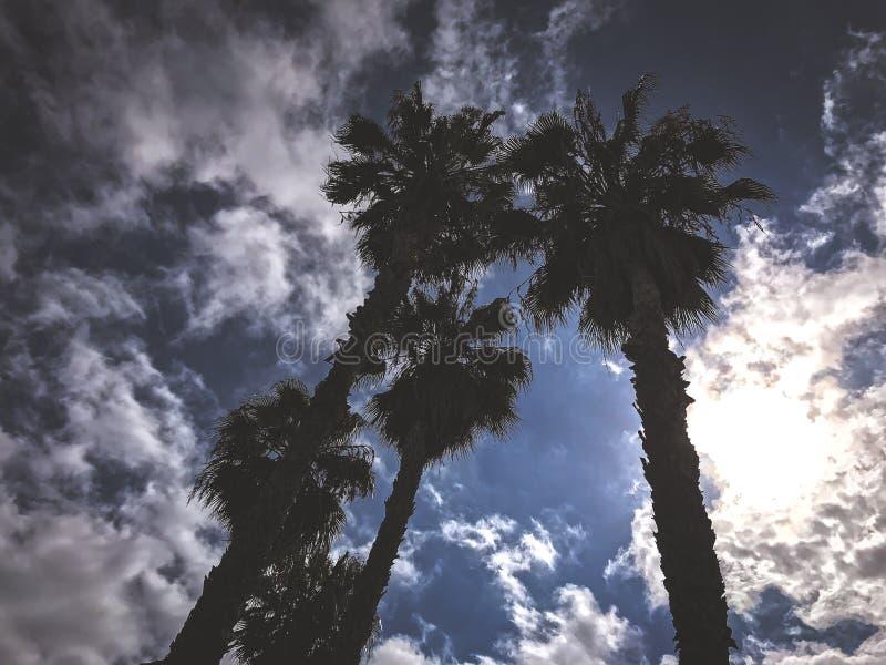 Fantastisk sikt över palmträd till himlen royaltyfria bilder