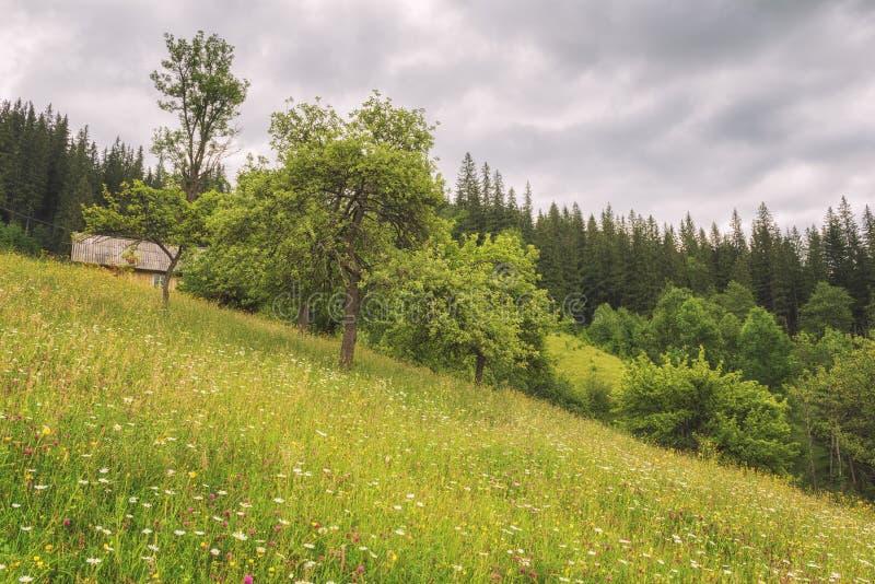 Fantastisk sikt av alpin bygd för sommar i Carpathian berg, naturlandskap royaltyfri foto