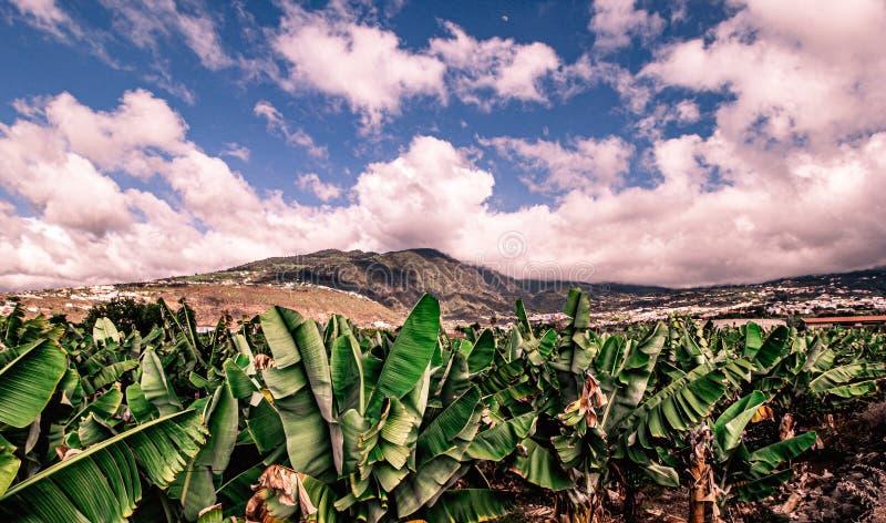 Fantastisk sikt av den Orotava dalen i tenerife royaltyfria bilder