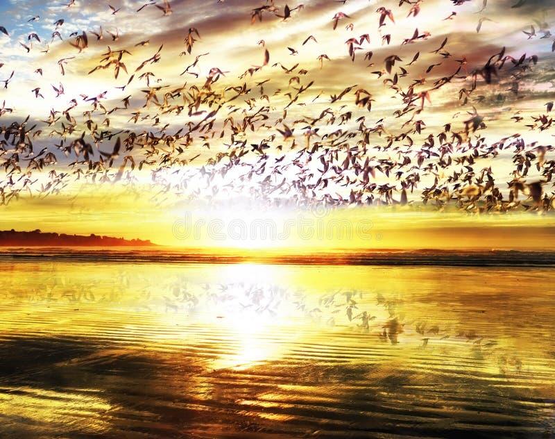 Fantastisk sikt av havkusten på gryning och många fåglar som flyger i himlen, reflekterad i sanden på kusten Tidig härlig mor royaltyfria foton
