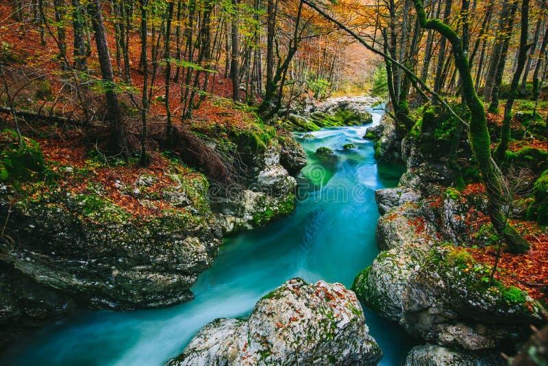 Fantastisk sikt av kanjonen Mostnica (Mostnice Korita) royaltyfri foto
