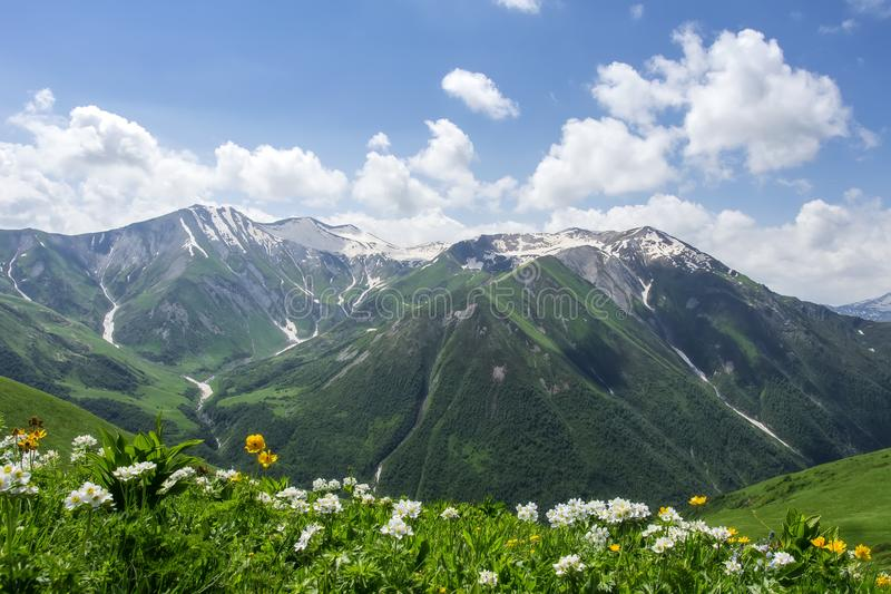 Fantastisk sikt på det georgian berglandskapet på solig dag för sommar i Svaneti Täckte gröna kullar gräs och blommor mot berget royaltyfri foto