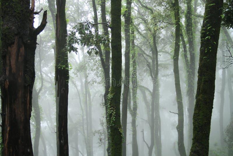 fantastisk skog royaltyfri foto