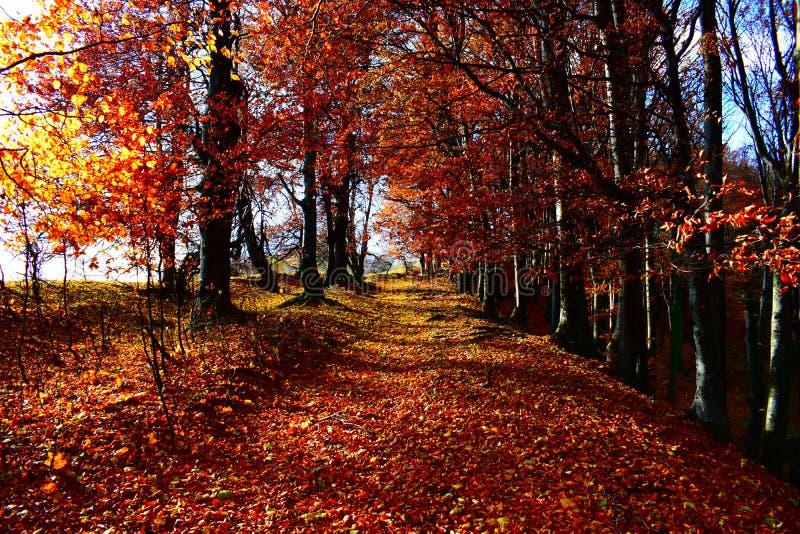 fantastisk skog royaltyfria foton