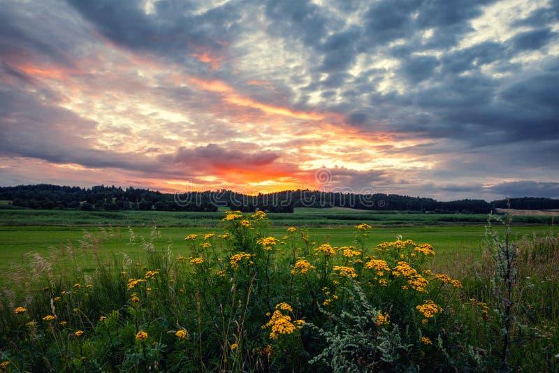 Fantastisk solnedgång över fälten i bygden royaltyfri bild