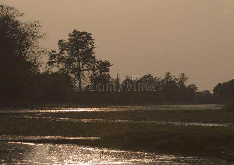 Fantastisk solnedgång i djungeln, Bardia, Nepal royaltyfria bilder