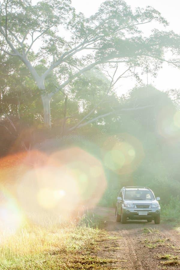 Fantastisk soluppg?ng som skiner till och med l?sa tr?d p? den gr?ssl?tt- och silverSUV bilen p? grusv?gen in i v?rldsarvet, royaltyfri fotografi