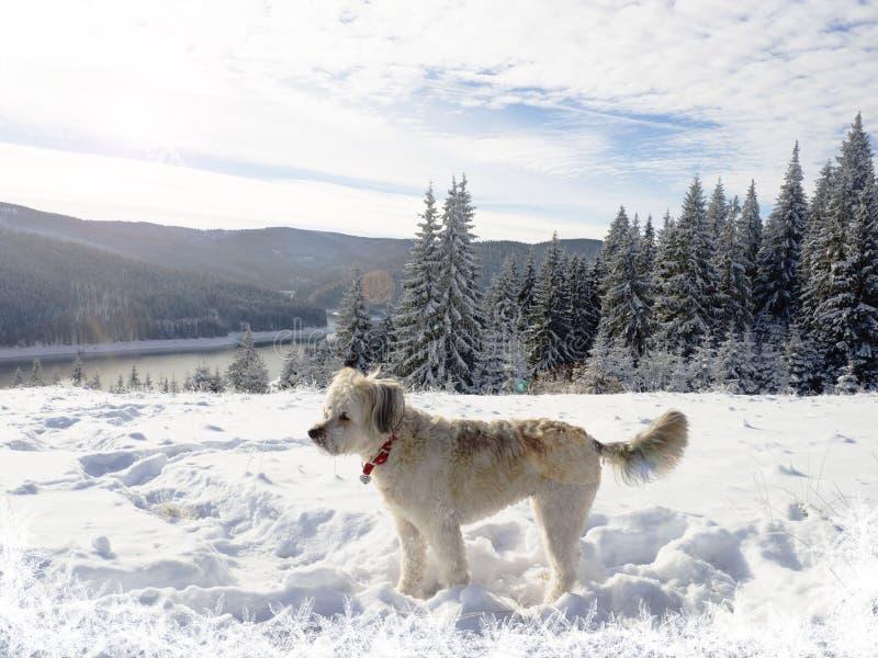 Fantastisk vinterunderland med hunden i snön royaltyfria bilder