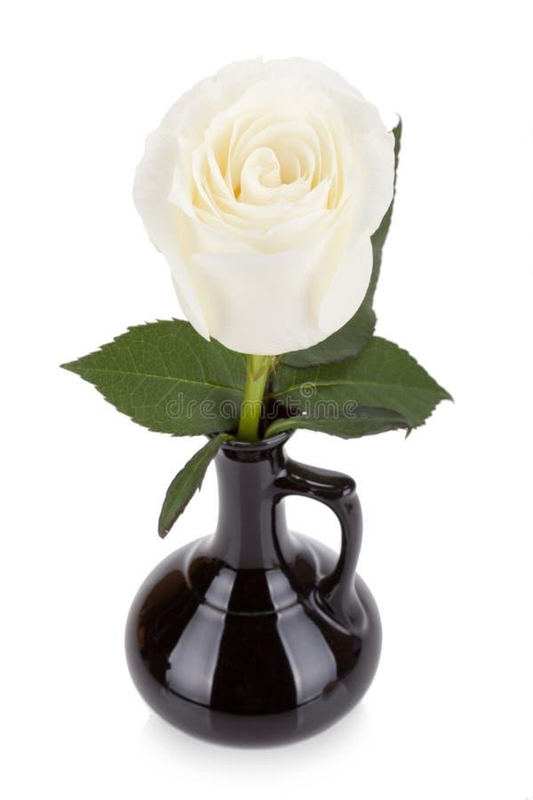 Fantastisk vitros i den isolerade svarta vasen royaltyfri bild