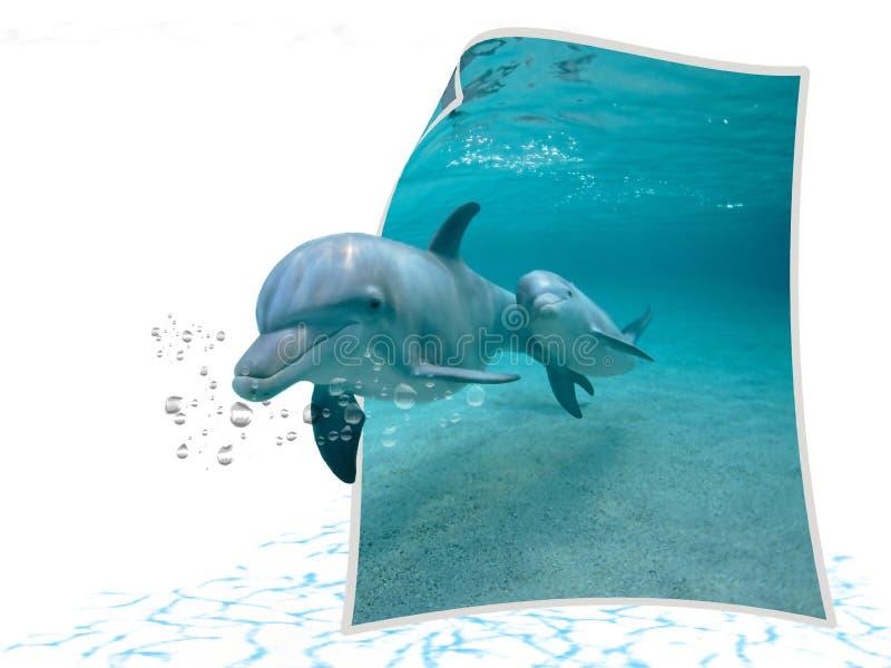 fantastiska delfiner stock illustrationer