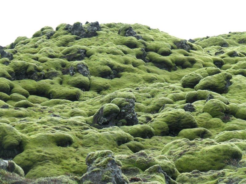 Fantastiska gröna mossiga Lava Field i södra Island, bakgrund royaltyfri fotografi