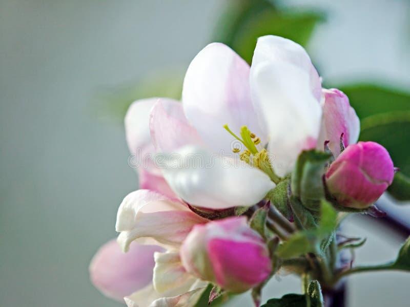 fantastiska härliga blomningar blommar white arkivbilder