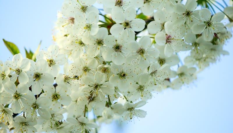 fantastiska härliga blomningar blommar white fotografering för bildbyråer