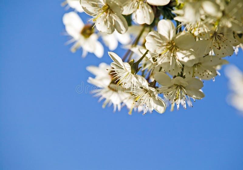 fantastiska härliga blomningar blommar white arkivbild