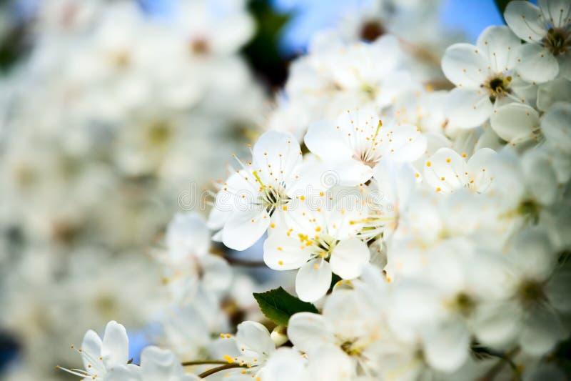 fantastiska härliga blomningar blommar white royaltyfri fotografi