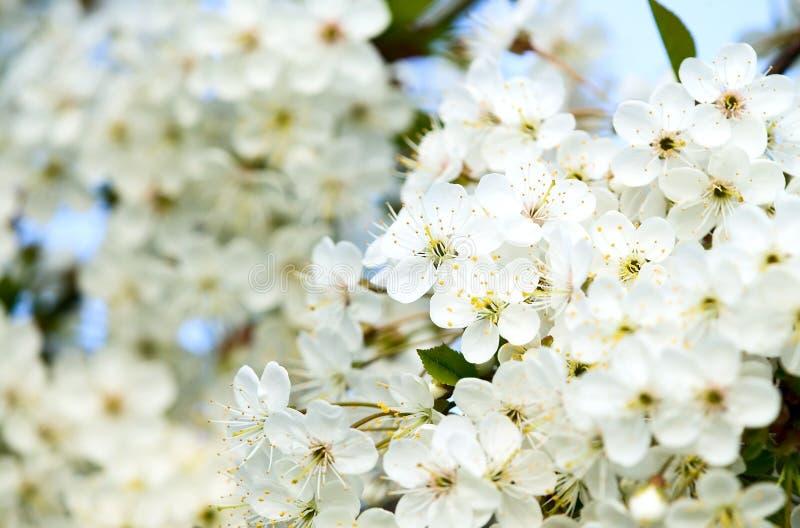 fantastiska härliga blomningar blommar white arkivfoto