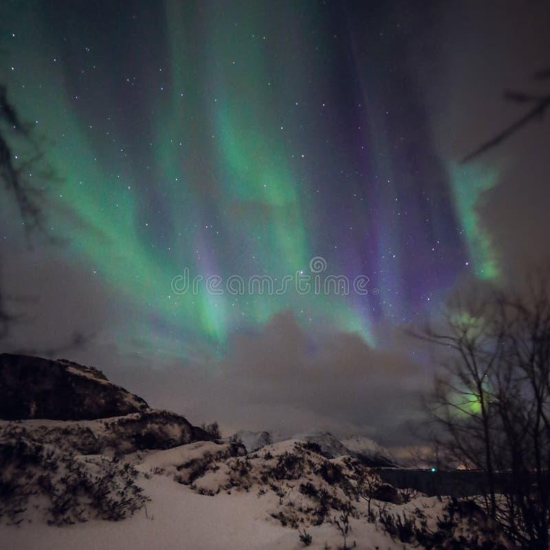 Fantastiska mångfärgade gröna Aurora Borealis vet också som nordliga ljus i natthimlen över det Lofoten landskapet, Norge, Scandi arkivfoto