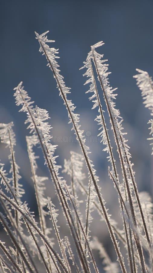Fantastiska rimfrost- och frostkristaller på gräs i solljus royaltyfri foto