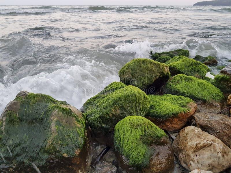Fantastiska stora stenar med grön mossa i havsvatten royaltyfria bilder