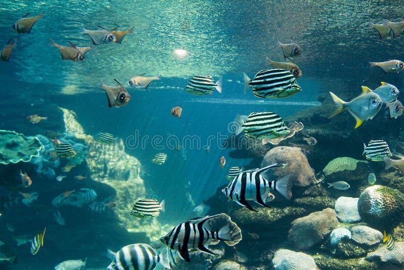Fantastiskt akvarium i det Perth Australien akvariet i Perth trevliga Australien fotografering för bildbyråer