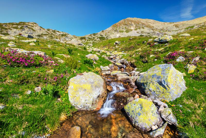 Fantastiskt alpint ställe med gurglandebäcken och färgrika blommor, Rumänien royaltyfri fotografi