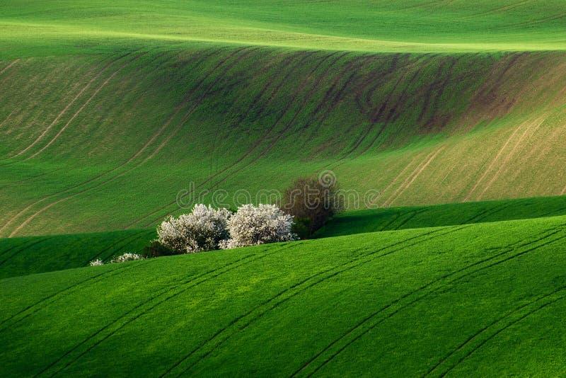 Fantastiskt detaljlandskap på det södra Moravian fältet, Tjeckien royaltyfri bild