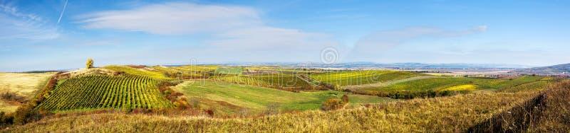 Fantastiskt höstlandskap med vingårdar arkivbild