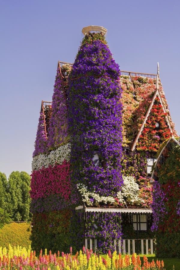 Fantastiskt hus för bakgrund med fönster av färgrika blommapetunior i Dubai mirakelträdgård arkivbilder