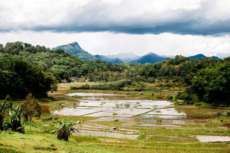 Fantastiskt landskap av södra Sualwesi, Rantepao, Tana Toraja, Indonesien Risfält med vatten, berg, molnig himmel royaltyfri bild