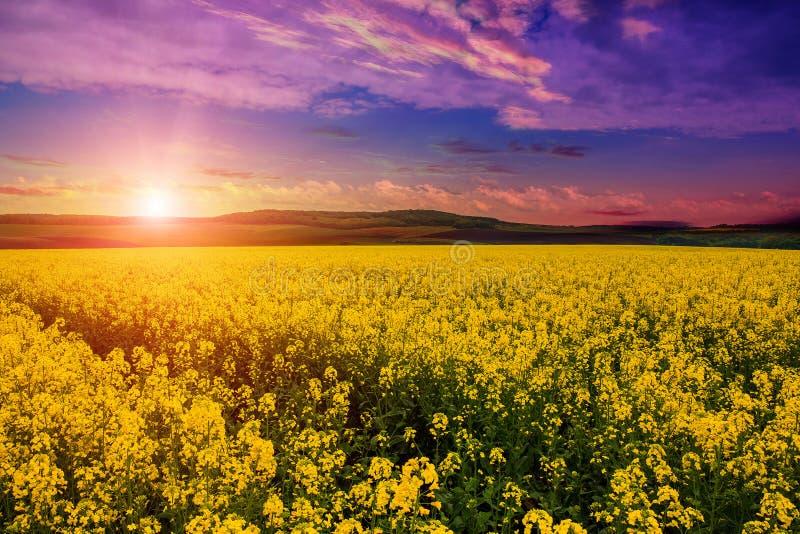 Fantastiskt landskap, flerfärgad himmel över ängen med gula blommor fotografering för bildbyråer