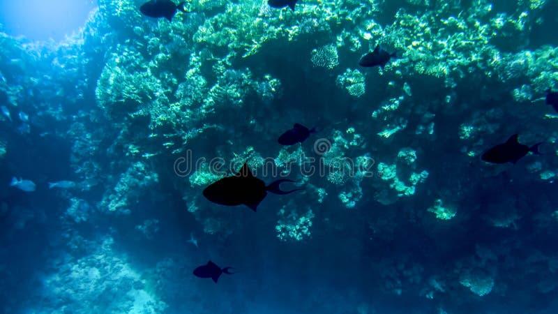 Fantastiskt undervattens- foto av stor skola av f?rgrika tropiska fiskar som simmar p? den stora korallreven arkivbild