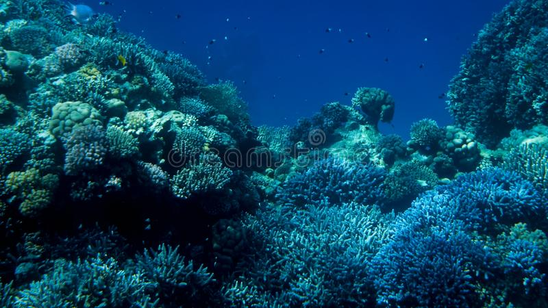 Fantastiskt undervattens- foto av stor skola av f?rgrika tropiska fiskar som simmar p? den stora korallreven fotografering för bildbyråer