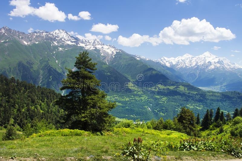 Fantastiskt vibrerande berglandskap i Georgia, Svaneti Grönt gräs på kullar, snöig berg och blått gör klar himmel på sommardag fotografering för bildbyråer