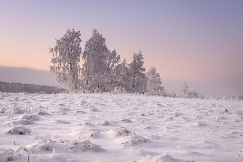 Fantastiskt vinterlandskap i morgonen Frostiga och snöig träd är på ängen som täckas av snö Gult solljus i vinterplats royaltyfri foto