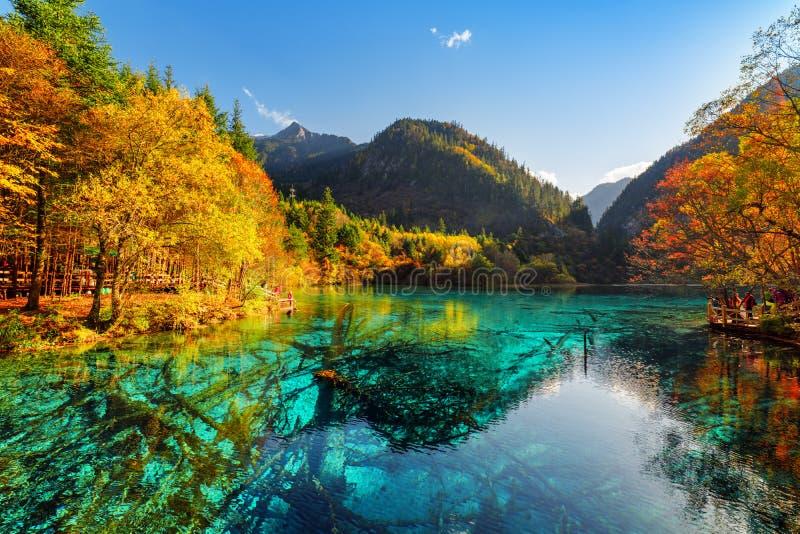 Fantastyczny widok zanurzający drzewni bagażniki w Pięć Kwiat jeziorze fotografia stock