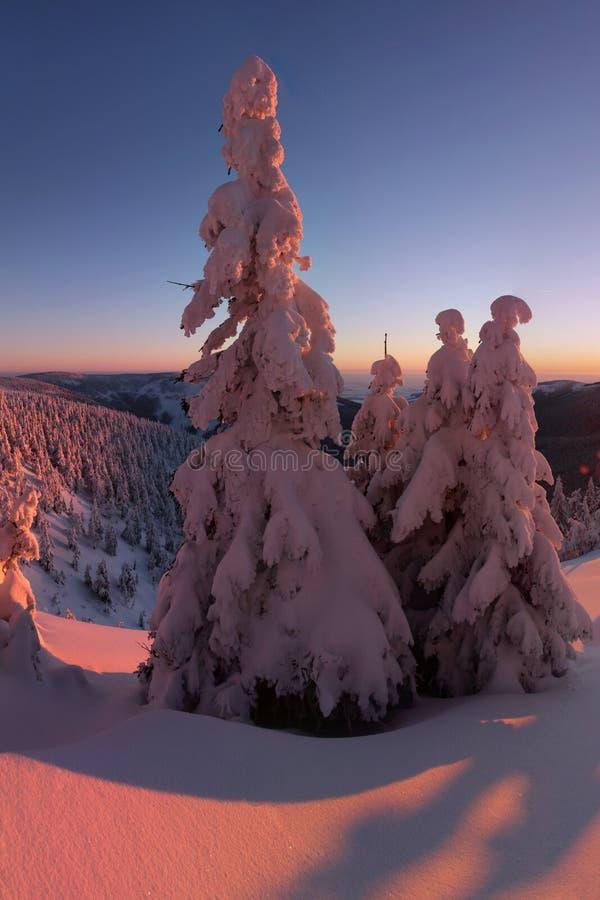 Fantastyczny wiecz?r i ranku zimy krajobraz Kolorowy chmurz?cy niebo Pi?kna ?wiatowy Magiczny ?nieg zakrywaj?cy drzewo pierwszy ? fotografia stock