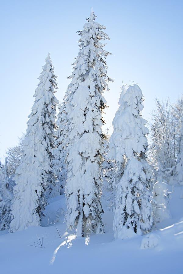 Fantastyczny zima krajobraz fotografia stock