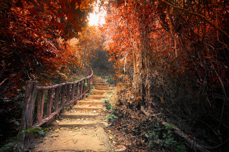Fantasy autumn forest with path way through dense trees. Fantasy forest in autumn surreal colors. Road path way through dense trees. Concept landscape for stock photos