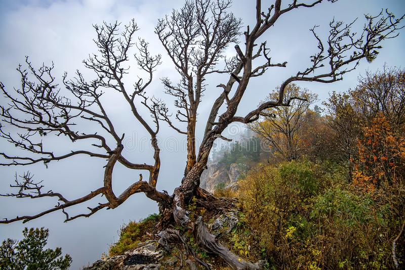 Fantasy autumn landscape with dried tree royalty free stock images