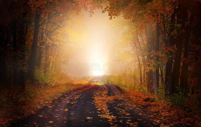 Magic forest.Beautiful autumn landscape royalty free stock photos