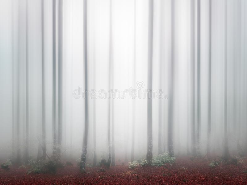 Fantasy bright forest with fog. And blur stock photography